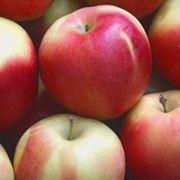 Яблоки (айдаред) фото
