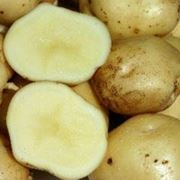 Картофель (белый) фото