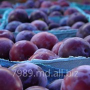 Prune in Moldova