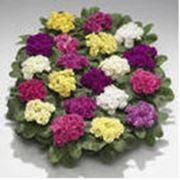 Семена для цветоводства фото