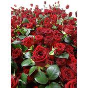 Розы Red Naomi фото