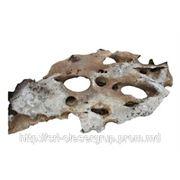 Декаративный камень морской фото
