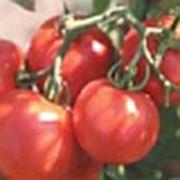 Семена помидоров-Слот F1 фото