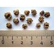Семена свеклы столовой фото