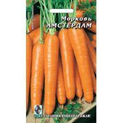 Семена Морковь Амстердам
