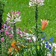 Устройство цветников и клумб №39 фото