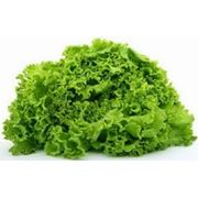 Семена салата фото