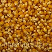 Кукуруза, на экспорт фото