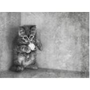 Игрушки для домашних животных фото