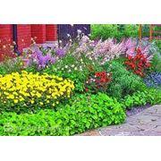 Растения садовые фото