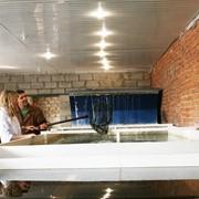 Разведение и выращивание рыбы фото