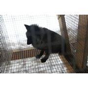 Клетка для лисицы Лиса-4 фото