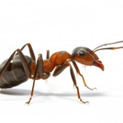 Уничтожение муравьев, борьба с муравьями,обработка фото