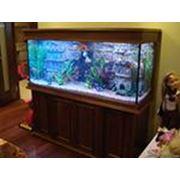 Вода для аквариума фото