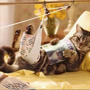 Кастрация здорового кота фото