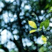 Пересадка деревьев фото