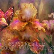 Картина по номерам Бабочка на ирисах фото