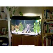 Прямоугольные аквариумы фото
