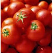 Семена овощей Томаты фото