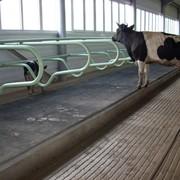 Оборудование для молочных ферм фото