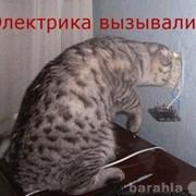Услуги электрика. фото