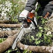 Расчистка участка от деревьев и мелколесья Тюмень фото