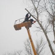 Обрезка деревьев любой сложности с помощью автовышки фото