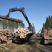 Глубокая переработка древесины фото