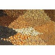 Семена в Украине