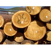 Система электронная система учета лесоматериалов фото