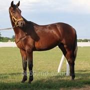 Купить лошадь фото