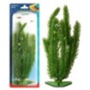 Растение искусственное фото