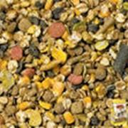 Экструдированный горох, горохово-соевая смесь фото