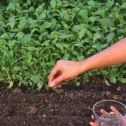 Плодородная почва фото