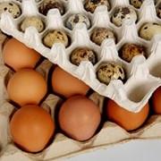 Тара для яиц фото