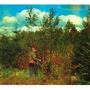 Мотоинструмент ухода за лесом фото
