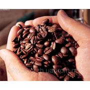 Консультация кофейного бизнеса