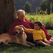 Страхование жизни собак фото