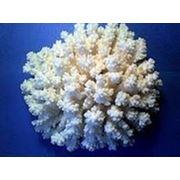 Натуральный коралловый пилинг Rose De Mer для тела фото