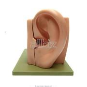 Диагностика слуха фото