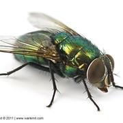 Средство против мух и др. насекомых Агита фото