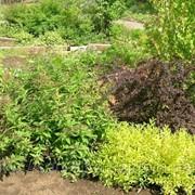 Кустарниковые растения фото