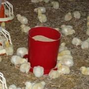 Кормушка для цыплят фото