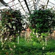 Горшечные и ампельные растения фото