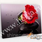 Алая роза холст арт.ТФХ4795 фотокартина (Размер R1 40х60 ТФХ) фото