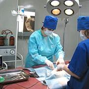 Хирургия ветерирарная фото