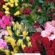 Оформление цветами и шариками фото