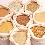 Фуражное зерно в мешках по Ставрополю. фото