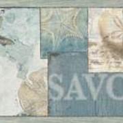 Обои Sand Dollar Patterns артикул DLR53511B фото