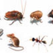 Дезинсекция, удаление вредных насекомых из древесины фото